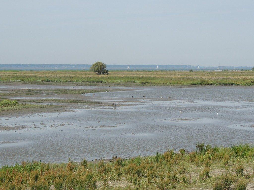 Afbeelding voor Spuimond-West geleverd aan Vereniging Natuurmonumenten
